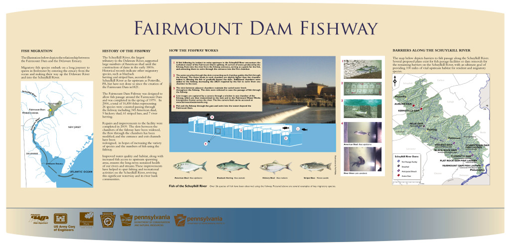 The Fairmount Dam Fishway in action.