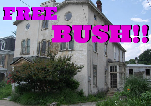 house -- another view with crazy bush FREE BUSHpm